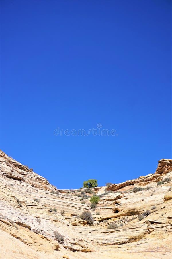 Pustynny południowo-zachodni piaskowcowy tło fotografia royalty free