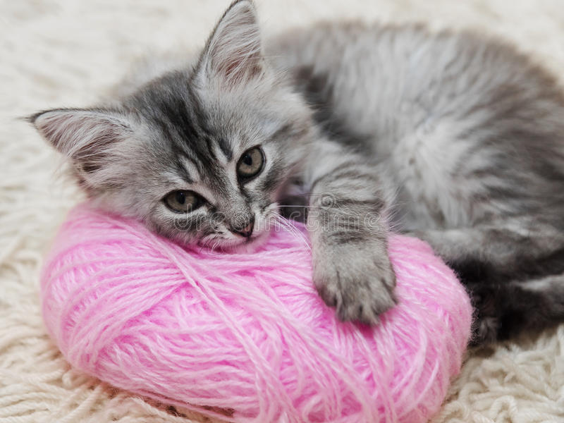 Puszyste szarość kocą się z różową piłką przędza fotografia stock