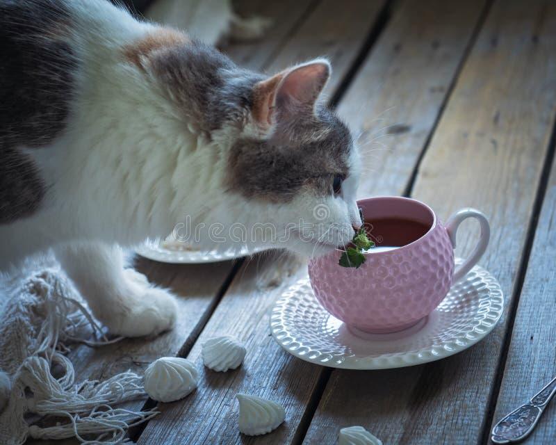 Puszysty młody kot obwąchuje nowego liść w herbacianej filiżance z herbatą fotografia royalty free