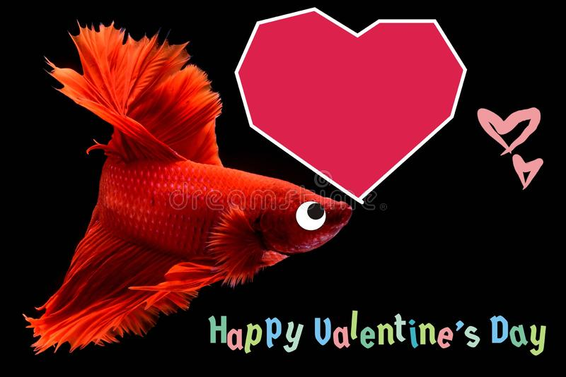 Valentine`s Day card with a heart on a betta fish background stock photos