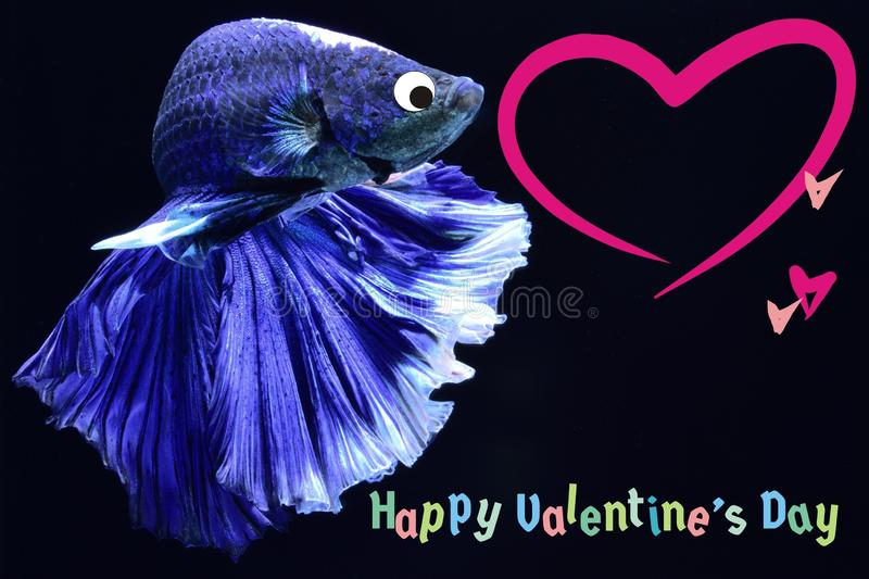 Valentine`s Day card with a heart on a betta fish background royalty free stock photos