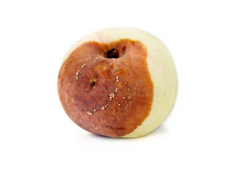 Putrefazione della frutta della mela immagini stock