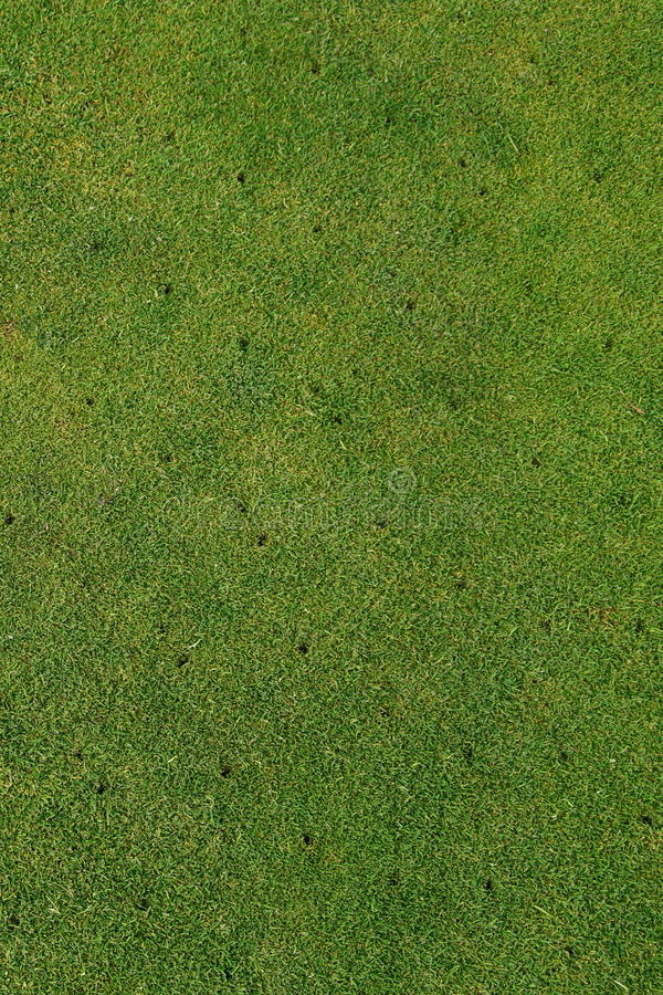 Putting green on golf course - Aerated - maintenance background vertical. Aerated putting green on golf course - maintenance background. A lawn undergoes mowing stock photography
