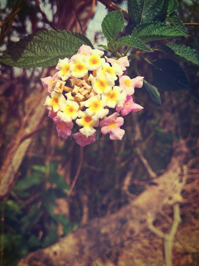 Putus blomma arkivfoto