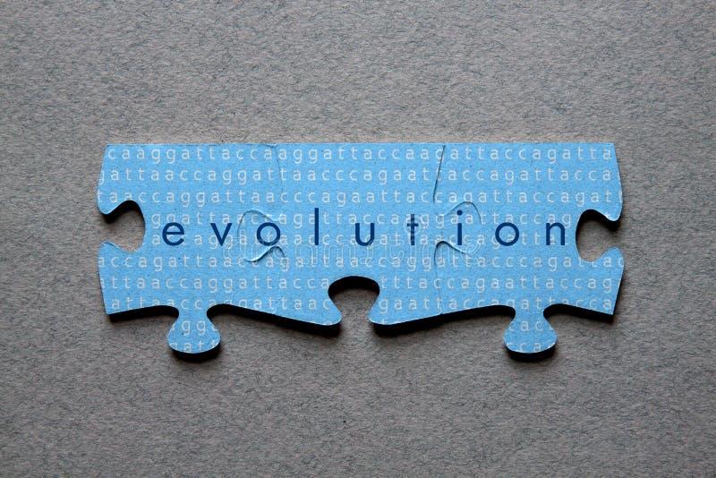 Puzzle d'évolution assorti photos libres de droits