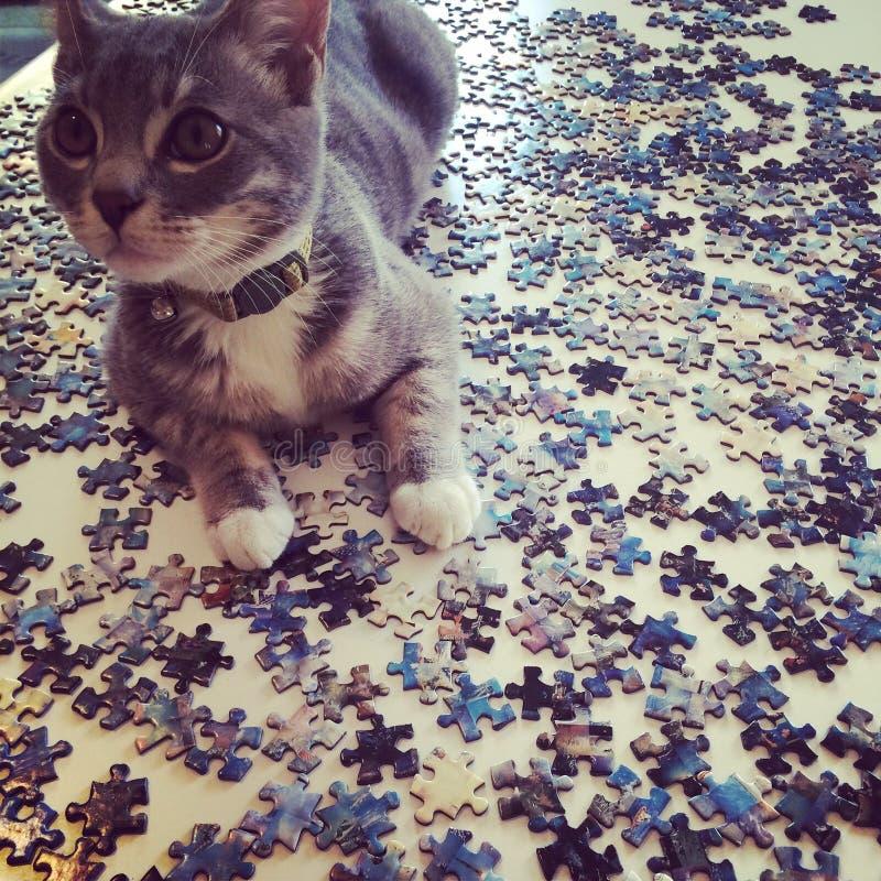 Puzzle di Kitty fotografie stock