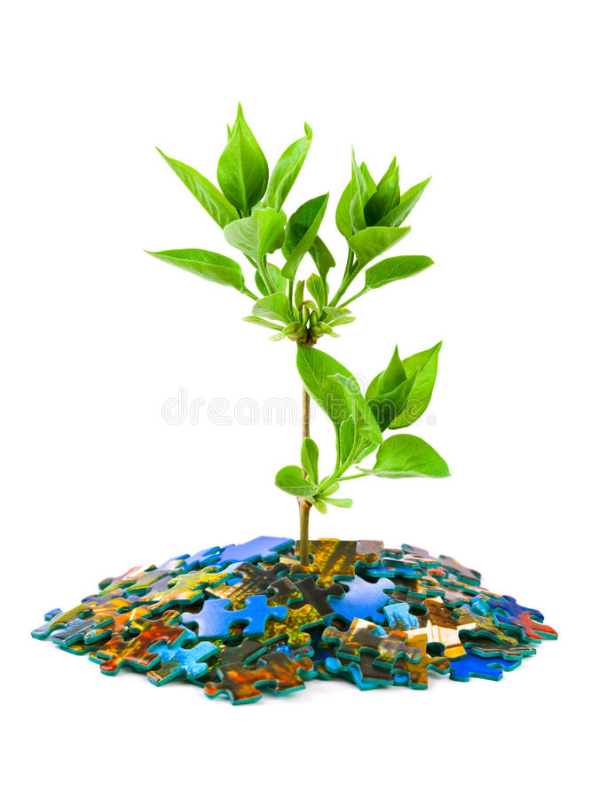 Puzzle and plant. Isolated on white background royalty free stock image