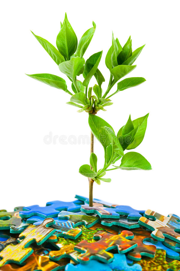 Puzzle and plant. Isolated on white background stock photography