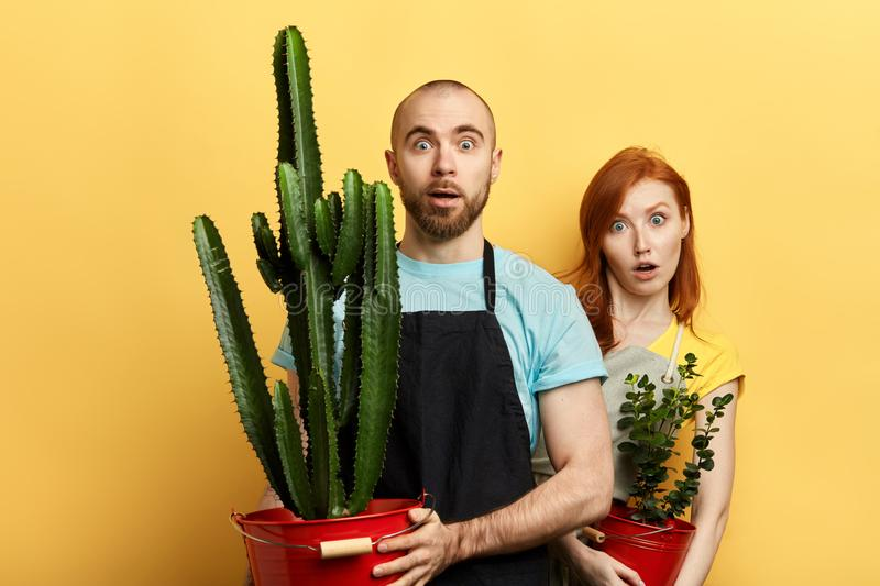 Puzzled couple in aprons amazed by high price of flowers royalty free stock image