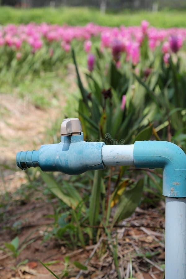 PVC drymba z PVC balową klapą i węża elastycznego włącznikiem w ogródzie obrazy royalty free