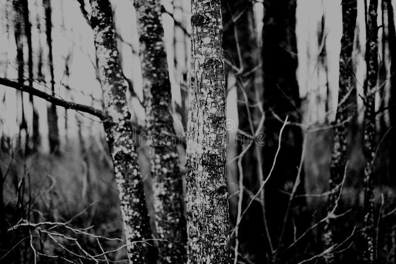 Walk through and around Kapice. Poland, Podlasie, Biebrza Marshes - 27.12.2012. Kapice is a small village located near Grajewo in Podlasie, Poland among the stock image