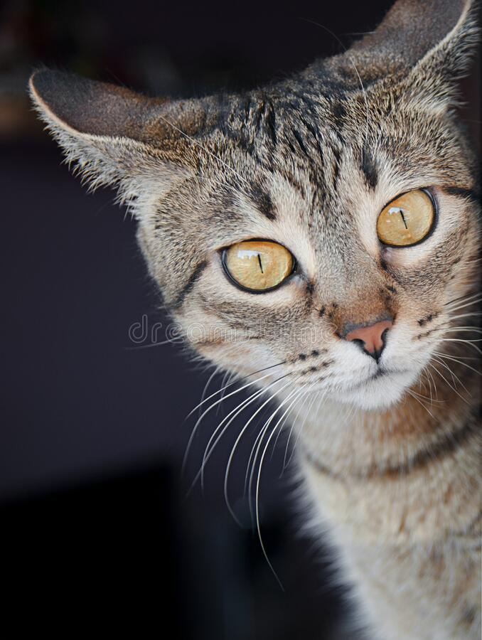 Tabby cat portrait. Near window royalty free stock photo
