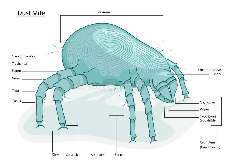 Pył domowa Lądzieniec ilustracji
