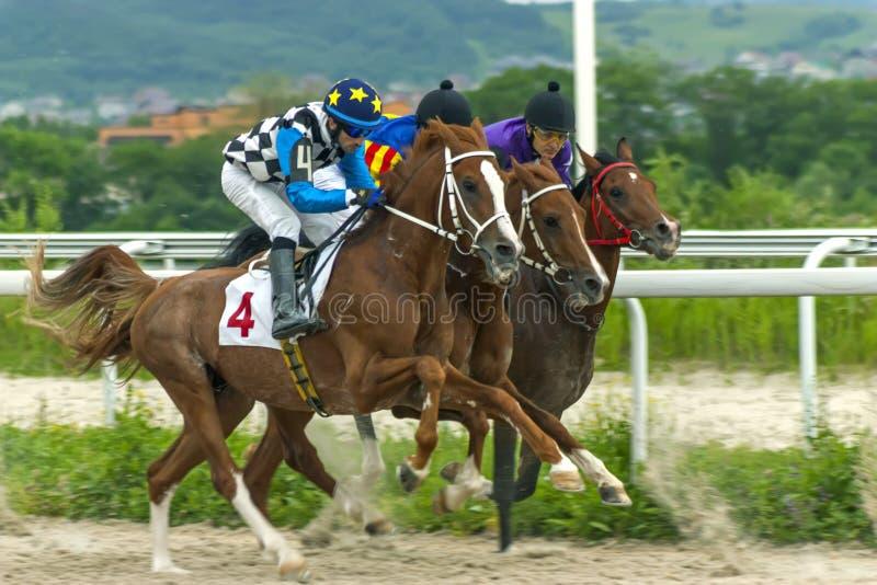 Pyatigorsk hästkapplöpning arkivfoto