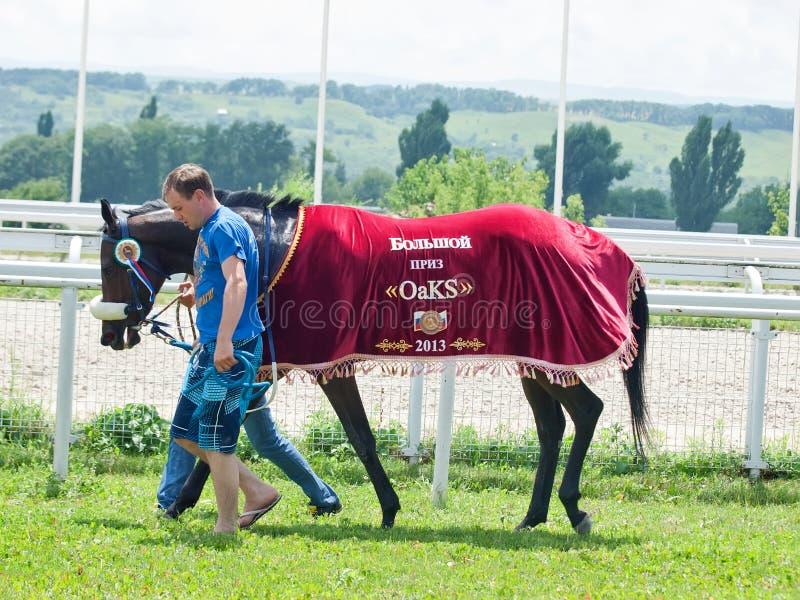 PYATIGORSK, RÚSSIA - 7 DE JULHO: compita para os carvalhos premiados grandes o das éguas imagens de stock