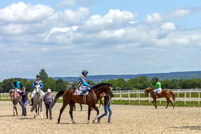 Before horse race. royalty free stock photo