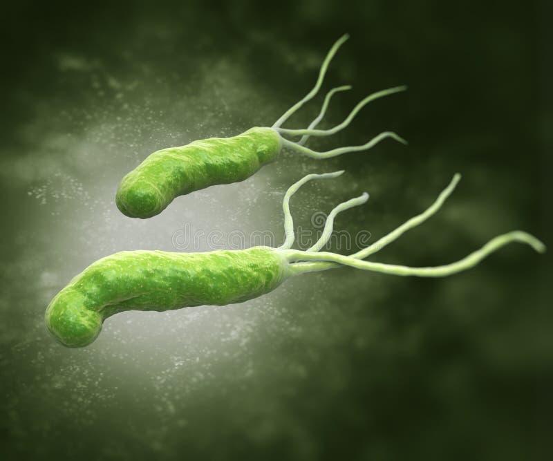 Pylori van Helicobacter stock illustratie