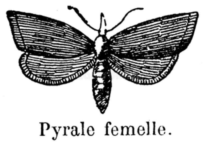 Pyrale-001 Free Public Domain Cc0 Image