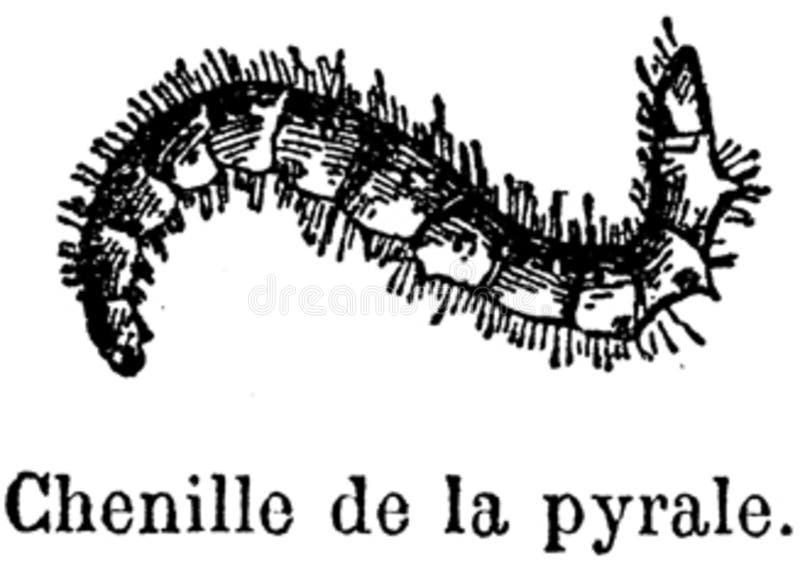 Pyrale-002 Free Public Domain Cc0 Image