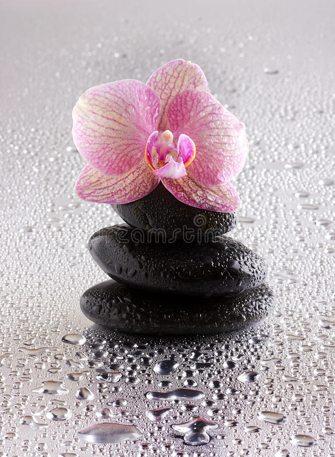Pyramid of black zen stones and orchid. On wet background royalty free stock images