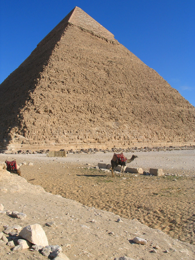 Pyramid of Chefren. With camels stock photos