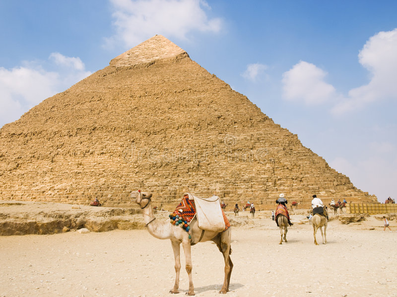 Pyramid of Chefren. Dromedary camel in front of the Great Pyramid of Chefren. Egypt series stock photos