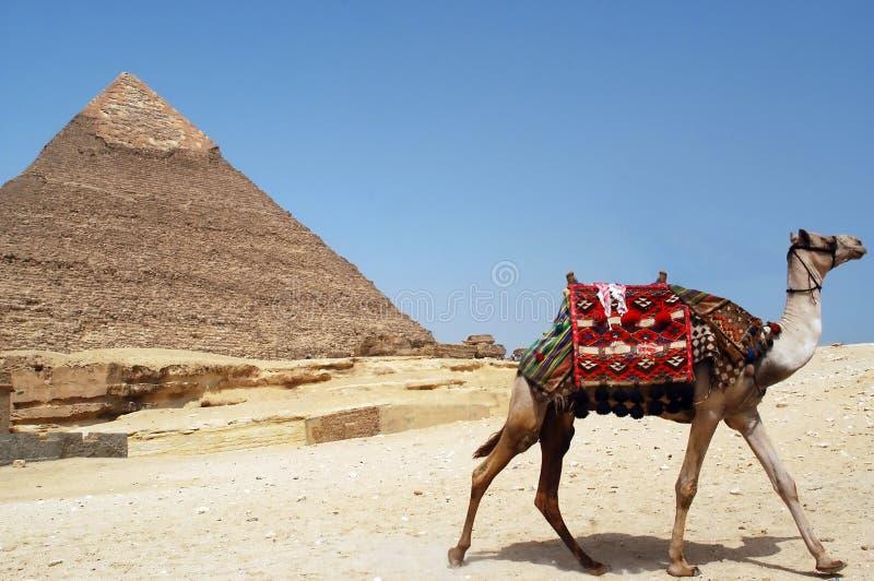 Pyramid of Chefren, Giza, Egypt. A camel runs away near the iconic Chefren pyramid of Giza, Egypt stock images