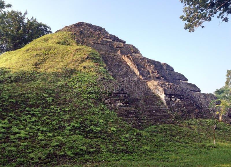 Pyramid i den Mayan staden av Tikal royaltyfri bild