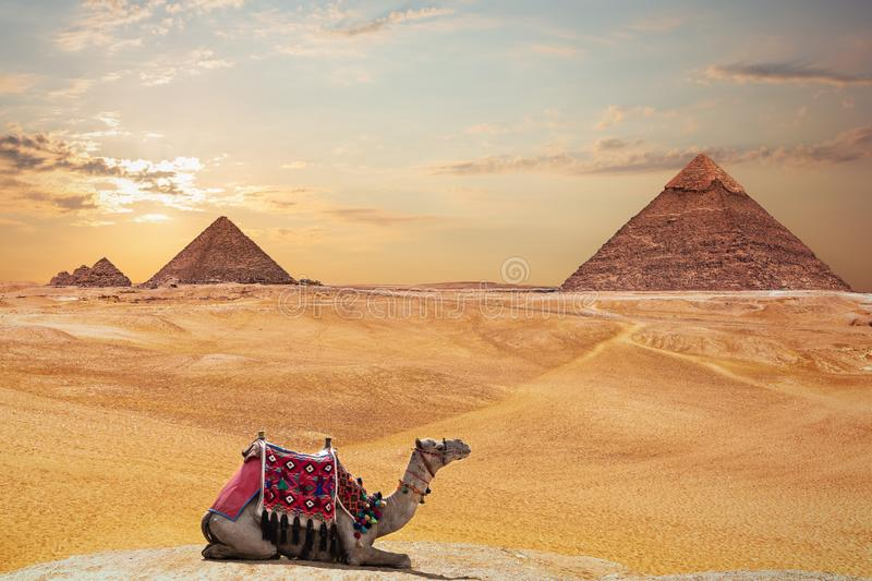 The Pyramid of Khafre and the Pyramid of Menkaure and a camel, Giza, Egypt stock images