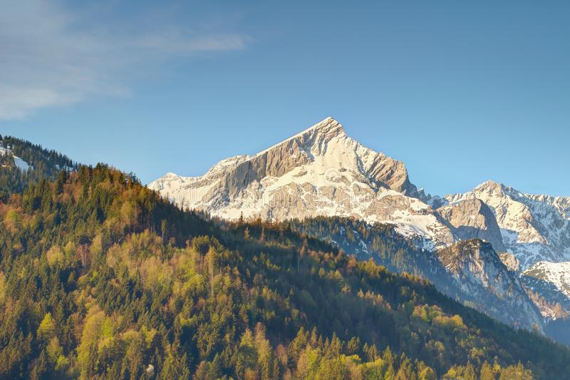Pyramidal Alpspitze peak above forests in Wetterstein mountains. Pyramidal Alpspitze peak of snowy Wettersteingebirge mountains above deciduous and evergreen royalty free stock photo