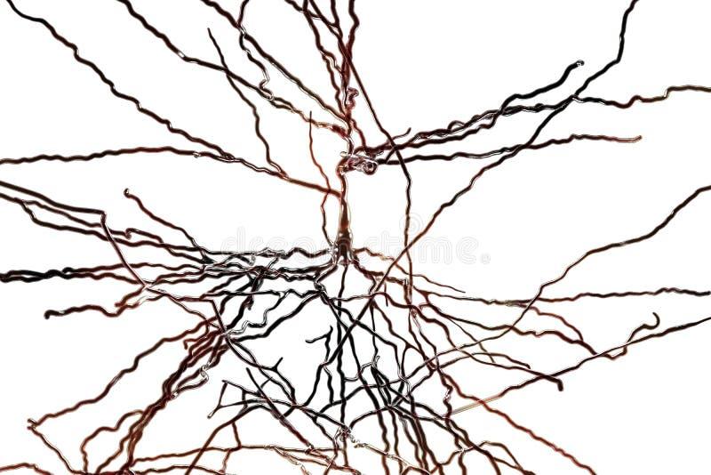 Pyramidal neuron, human brain cell vector illustration