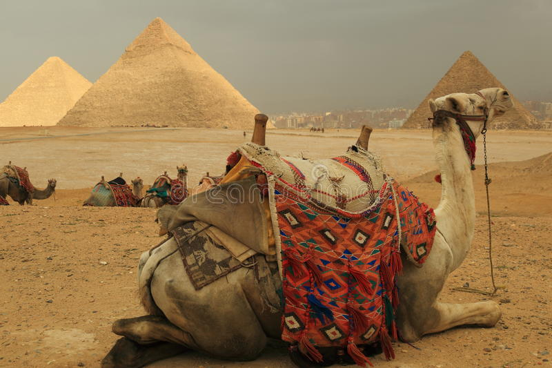 Pyramiden und Kamele stockbild