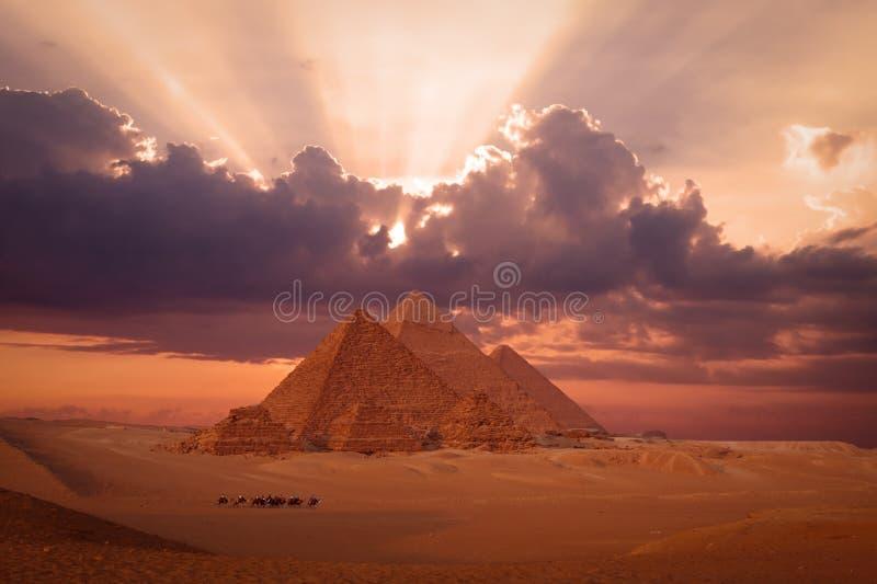 Pyramider giza cairo Egypten med kameldrevet, caravane på solnedgångphantasyen royaltyfria bilder
