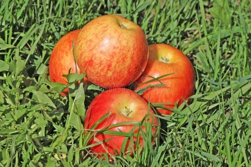 pyramidred för äpple fyra royaltyfri fotografi