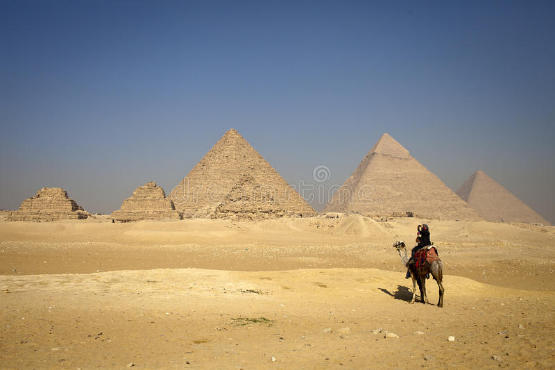 Pyramids and alone camel, lonely people. A lonely people, on the plateau point of Giza pyramids stock photo