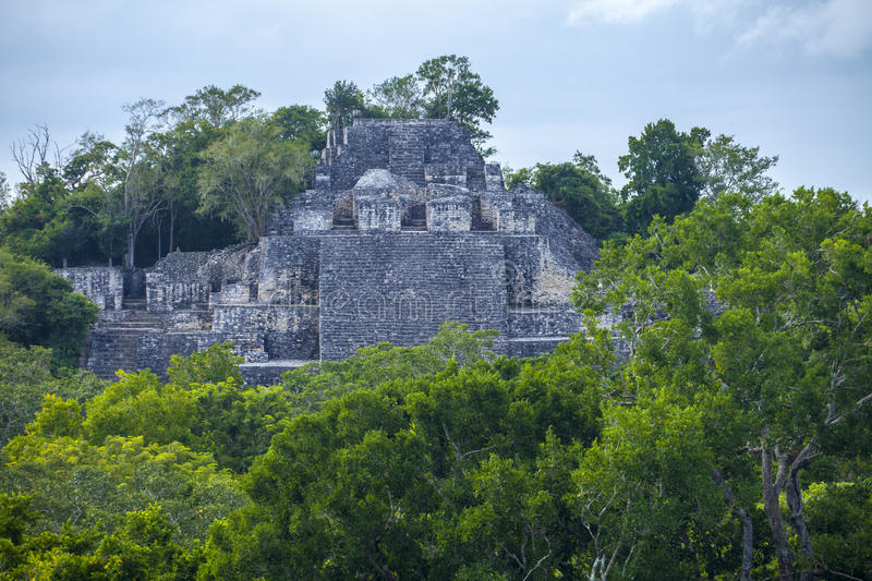 Pyramids Mexico Calakmul forest trees stock photo
