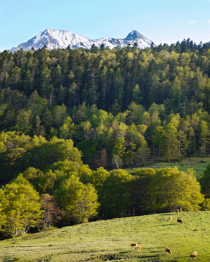 Download Pyrenean landscape scenery stock photo. Image of graze - 17537528