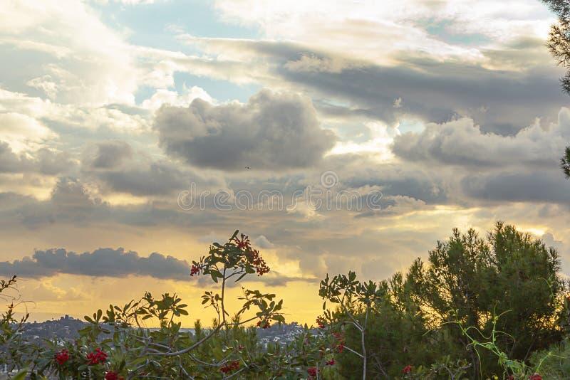 Pyrocantha cespuglio con le bacche rosse che trascurano valle e collina coperta domestica al tramonto fotografia stock