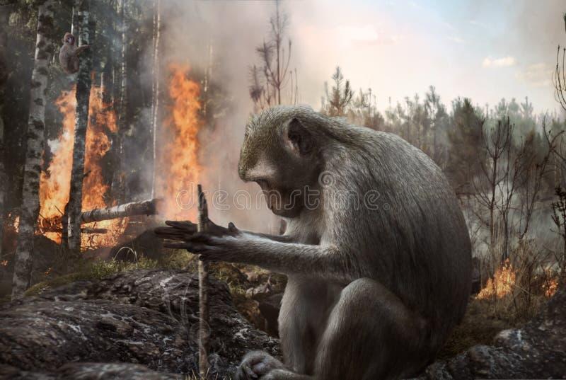 Pyromanmokey som st?ller in brand i skogen royaltyfri bild