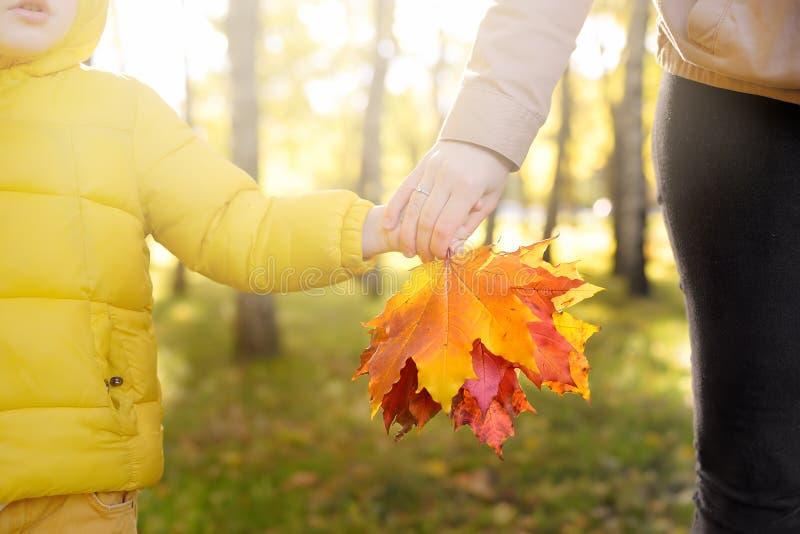 Pys med hans moder som samlar lönnlöv under promenad i skogen på den soliga höstdagen Aktiv familjtid p? naturen royaltyfri fotografi