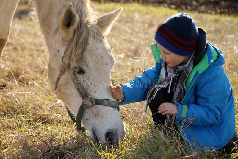 Pys och vit häst arkivfoton