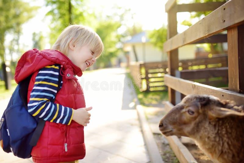 Pys som daltar får Barn p? den inomhus dalta zoo Unge som har gyckel i lantg?rd med djur Barn och djur royaltyfri foto