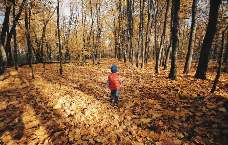 Pys som går och spelar i utomhus- nära det Caucasian barnet för höstlig skog som bakifrån fotograferas arkivbilder