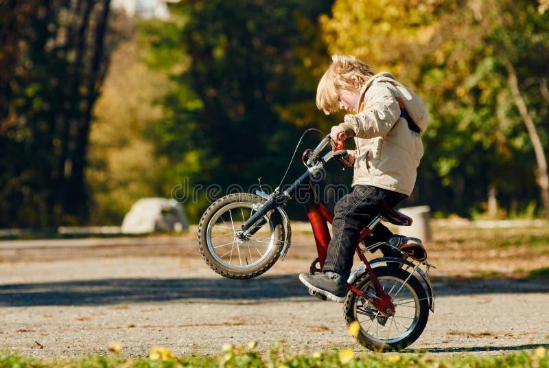 Pys som gör en wheelie på det bakre hjulet royaltyfri fotografi
