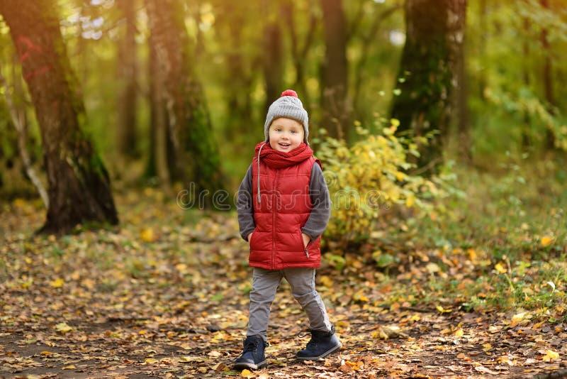 Pys under promenad i skogen på den soliga höstdagen royaltyfria foton