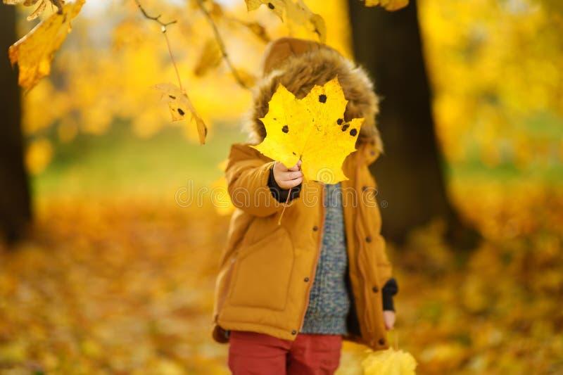 Pys under promenad i skogen på den soliga höstdagen arkivfoton