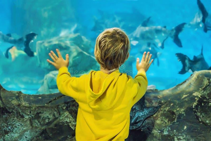 Pys unge som håller ögonen på stimen av fisken simma i oceanariumen, barn som tycker om undervattens- liv i akvarium arkivfoton