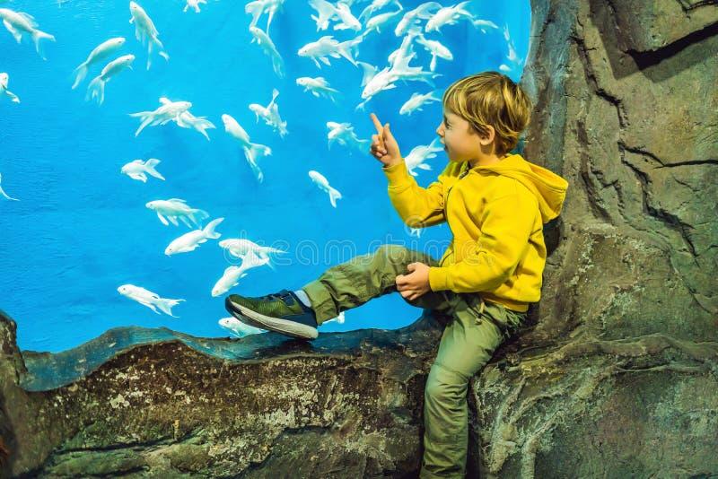 Pys unge som håller ögonen på stimen av fisken simma i oceanariumen, barn som tycker om undervattens- liv i akvarium royaltyfri foto
