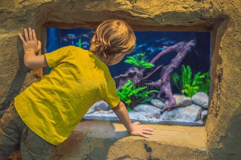 Pys unge som h?ller ?gonen p? stimen av fisken simma i oceanariumen, barn som tycker om undervattens- liv i akvarium royaltyfri bild