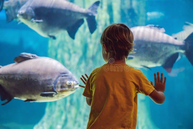 Pys unge som h?ller ?gonen p? stimen av fisken simma i oceanariumen, barn som tycker om undervattens- liv i akvarium royaltyfria bilder